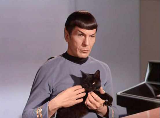 tumblr_static_spock_cat
