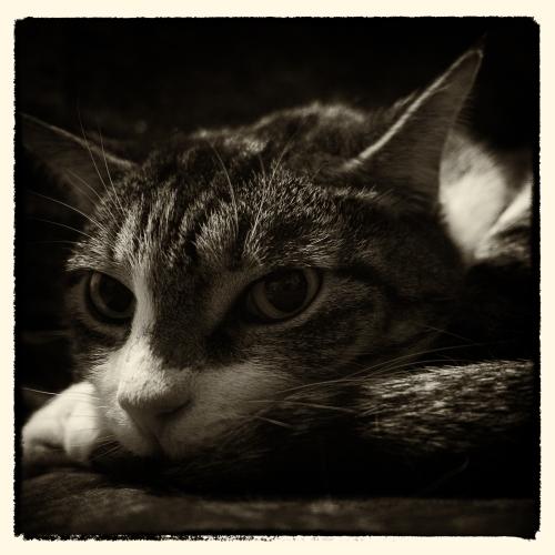 Spy Cat 7 November 2013